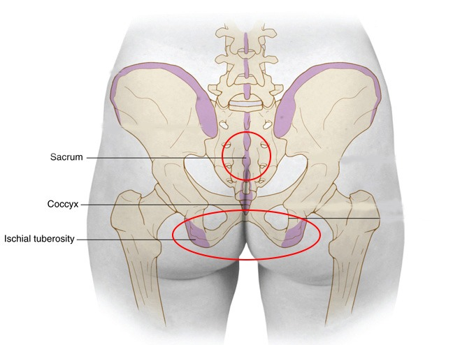 sacrum and sitting bones